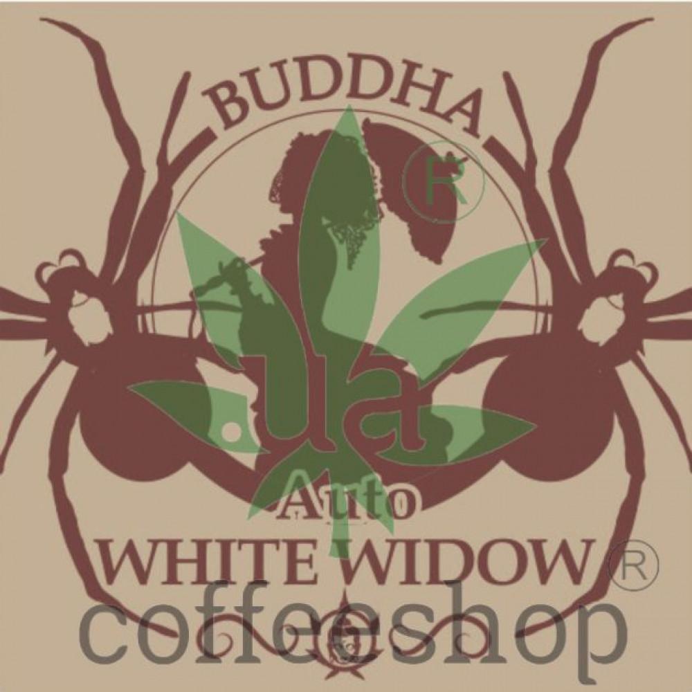 BUDDHA AUTO WHITE WIDOW FEMINIZED