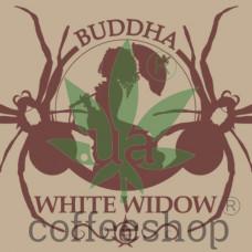 BUDDHA WHITE WIDOW FEMINIZED