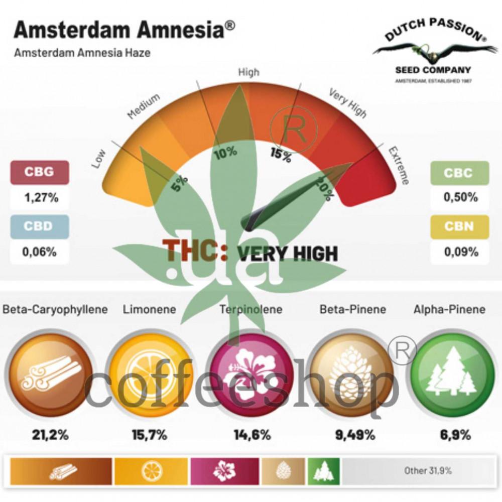 Amsterdam Amnesia feminised