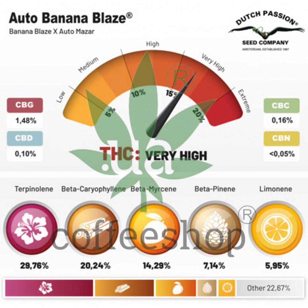 Auto Banana Blaze feminised