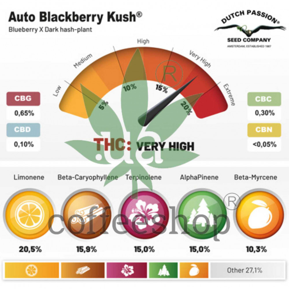 Auto Blackberry Kush feminised