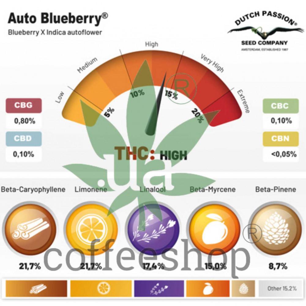 Auto Blueberry feminised