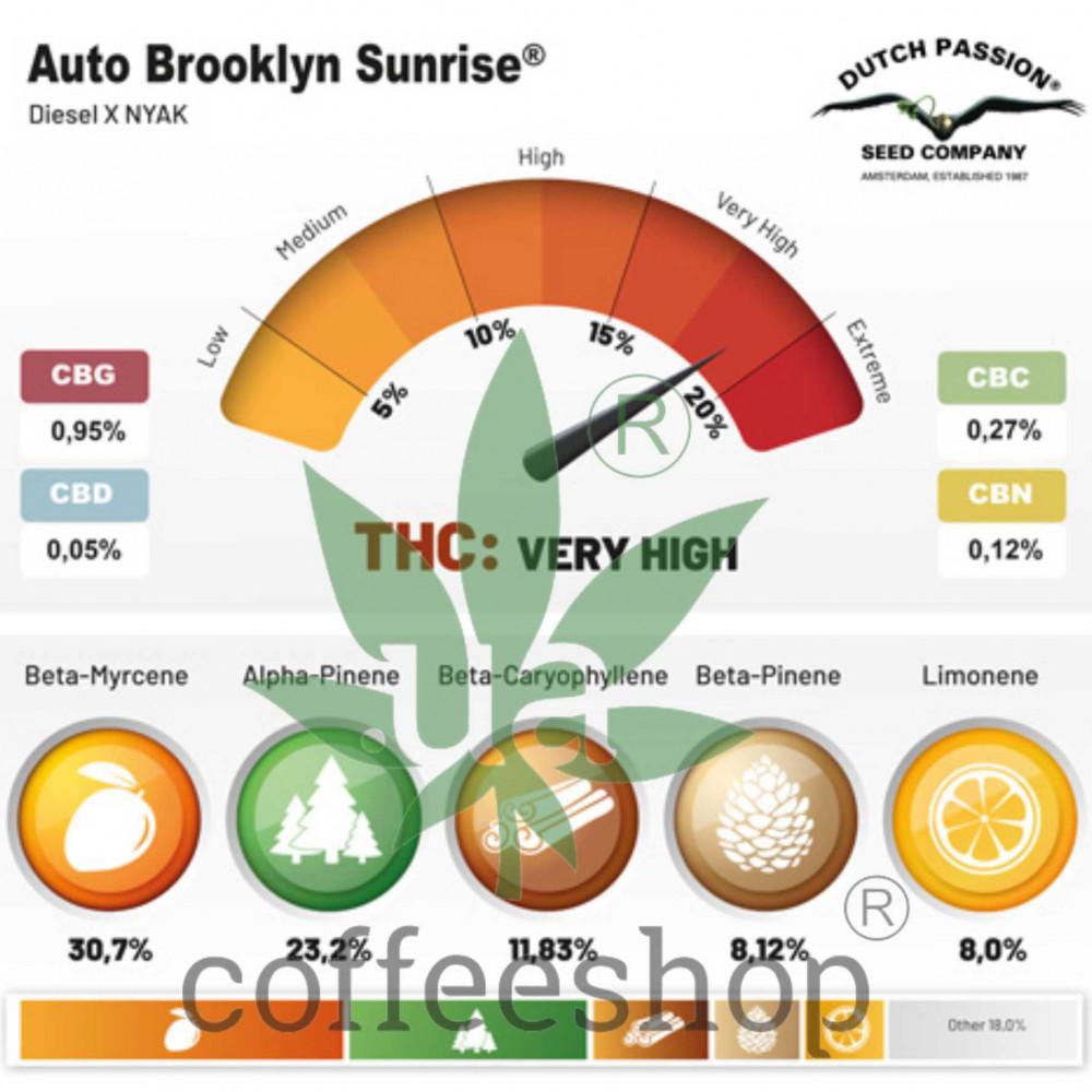 Auto Brooklyn Sunrise feminised