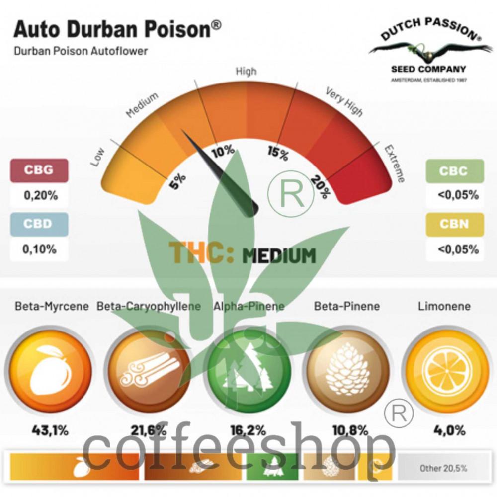 Auto Durban Poison Feminised