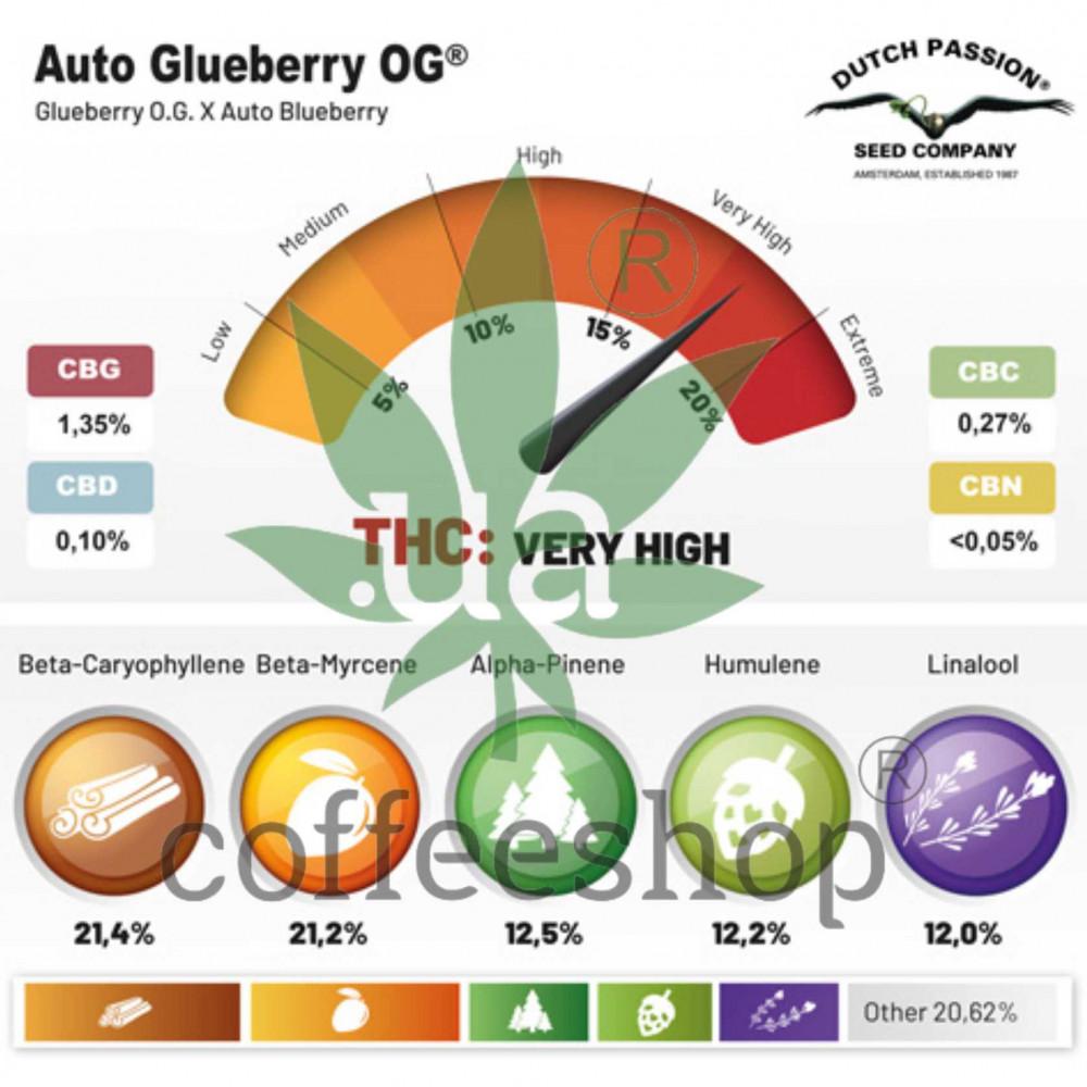 Auto Glueberry OG feminised