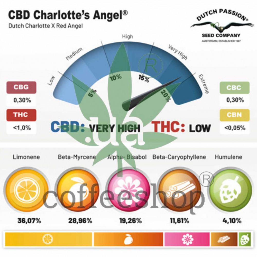 CBD Charlotte's Angel feminised