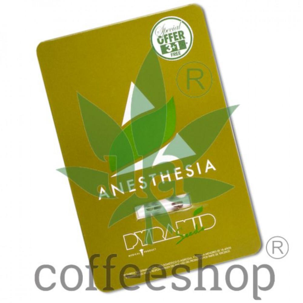 Anesthesia Feminised