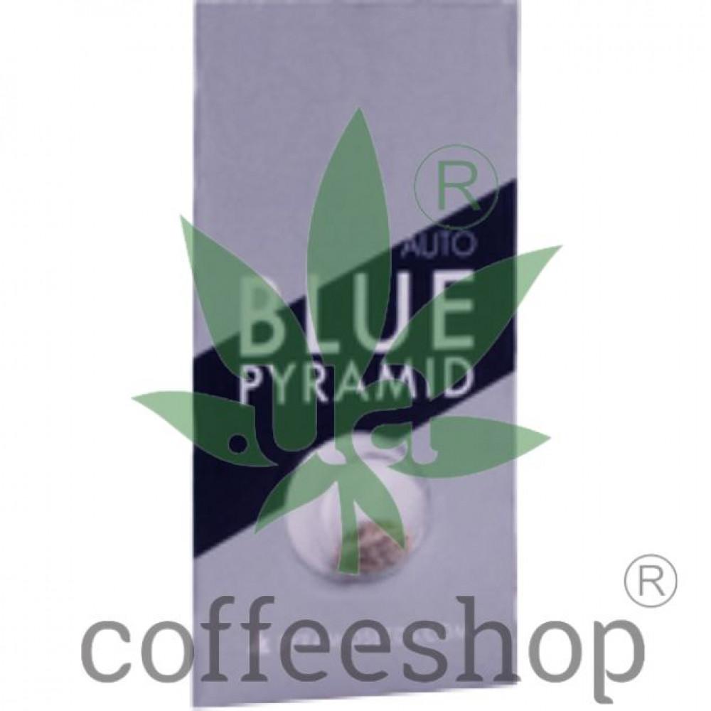 Auto Blue Pyramid Feminised