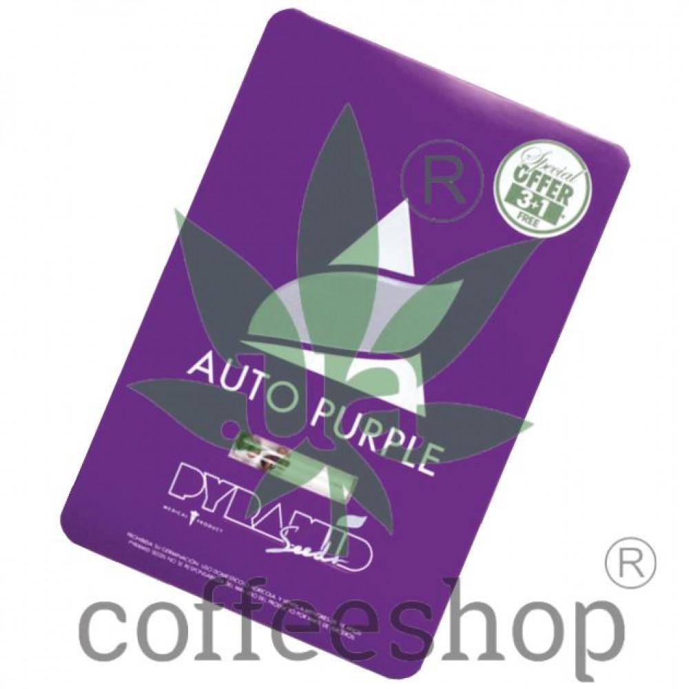 Auto Purple Feminised
