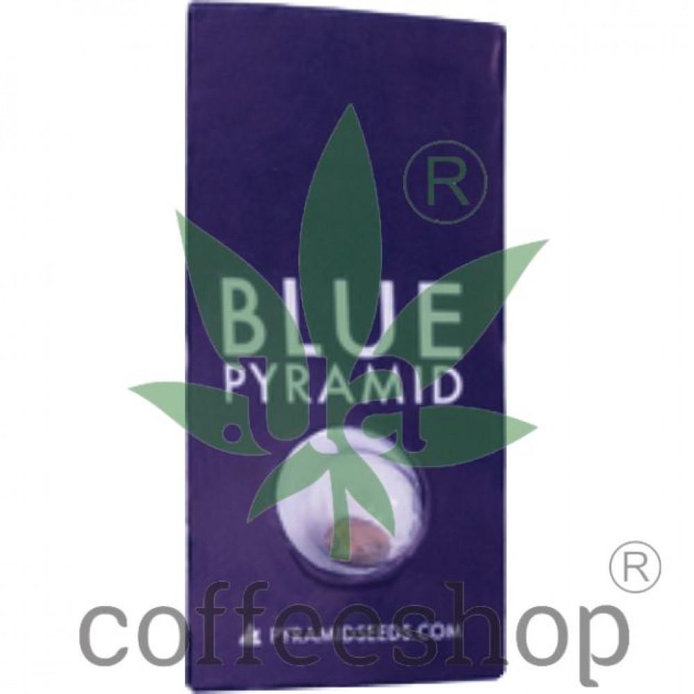 Blue Pyramid Feminised