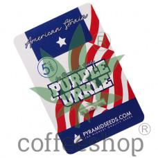 Purple Urkle Feminised