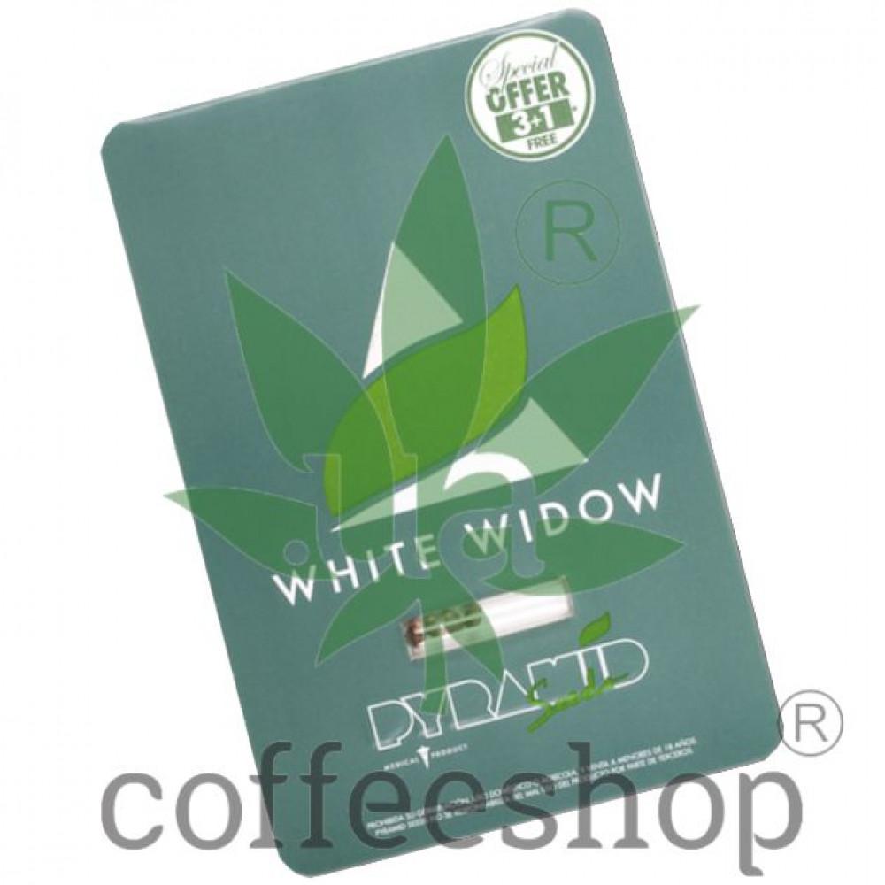 White Widow Feminised Pyramid Seeds