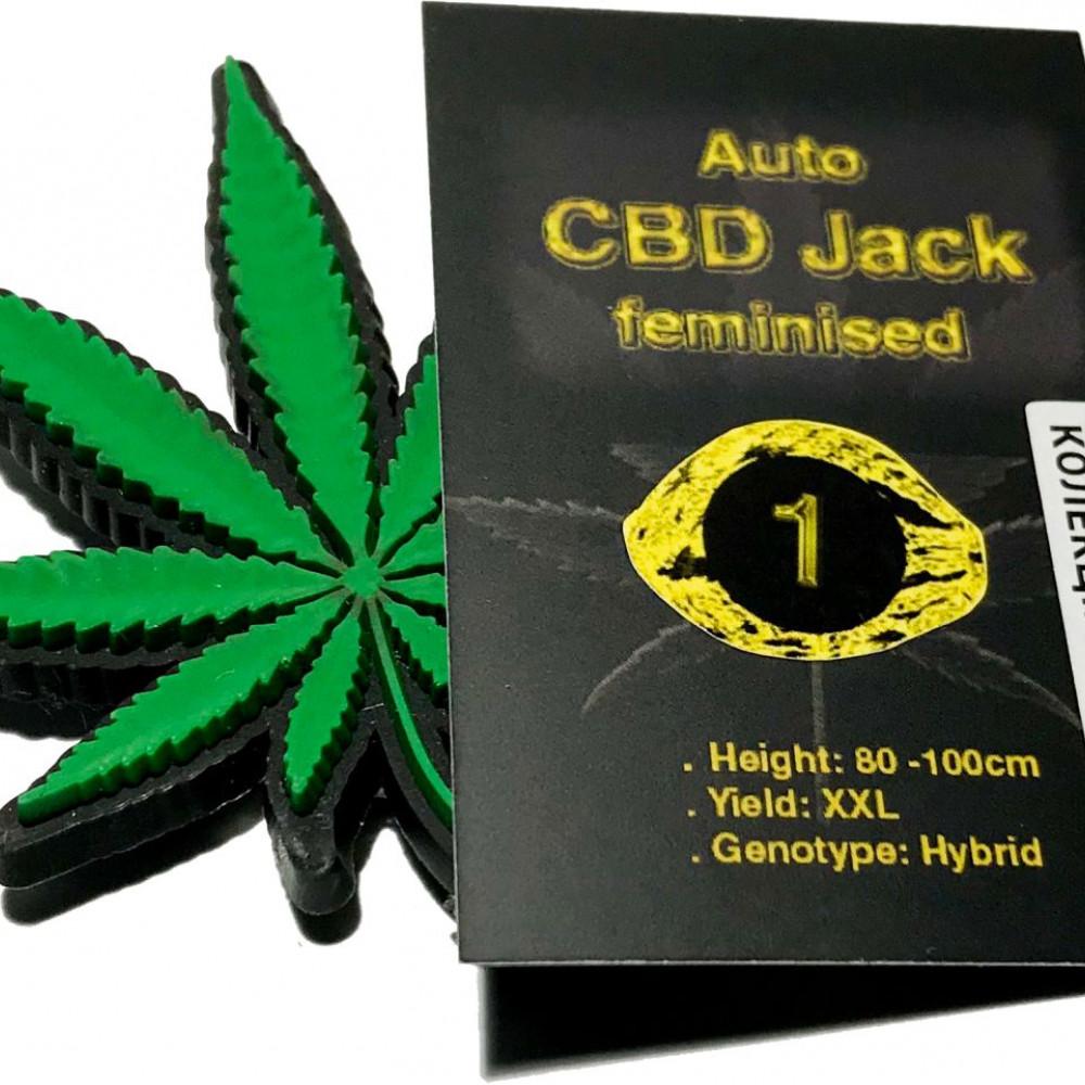 Auto CBD Jack feminised