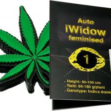 Auto iWidow feminised