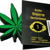 Auto Sierra feminised