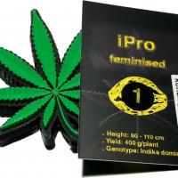iPro feminised