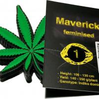 Maverick feminised