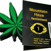 Mountain Haze feminised