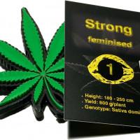 Strong feminised