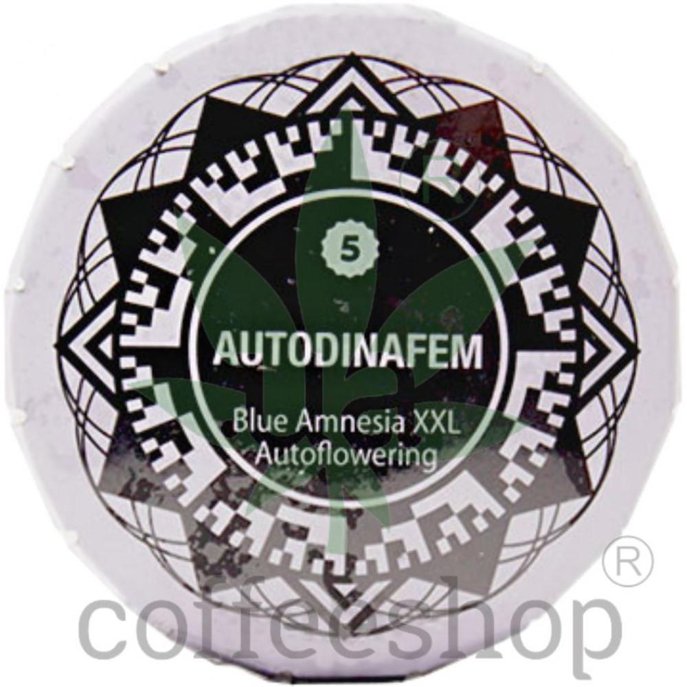 Auto Blue Amnesia XXL Feminised