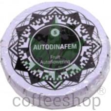 Auto Fruit Feminised