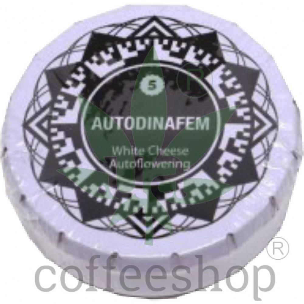 Auto White Cheese Feminised