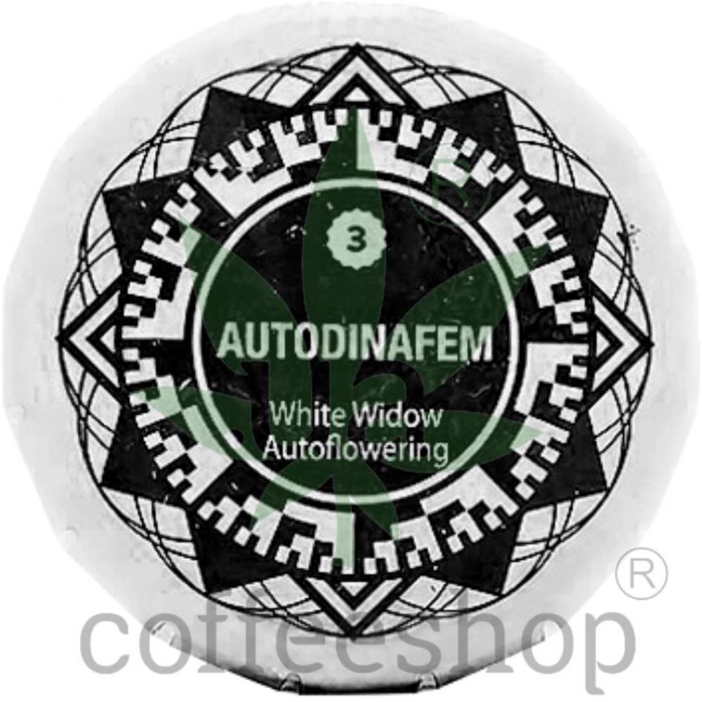 Auto White Widow Feminised Dinafem