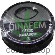 Bubba Kush Feminised