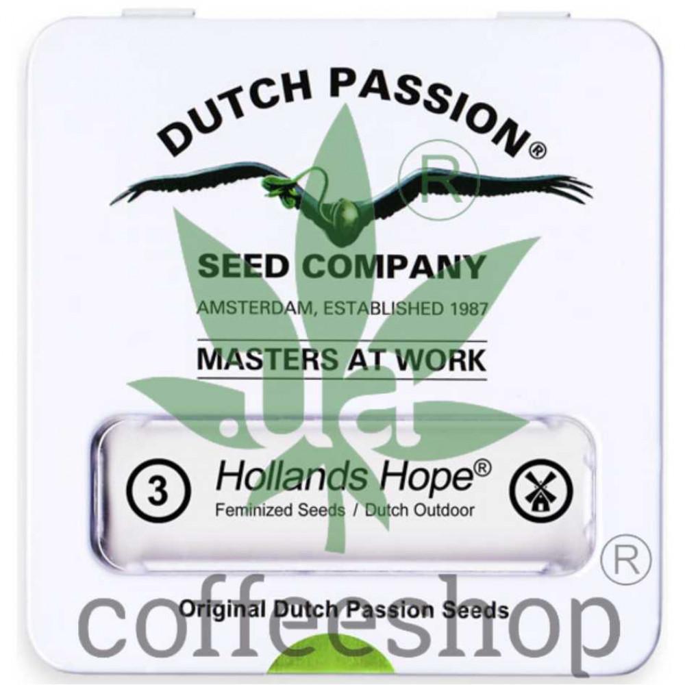 Hollands Hope feminised
