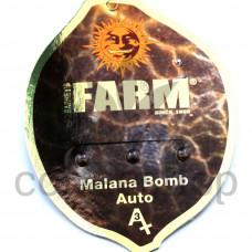 Auto Malana Bomb Feminised