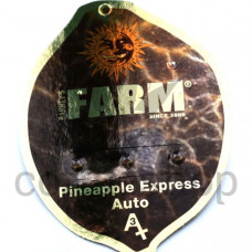 Auto Pineapple Express Feminised