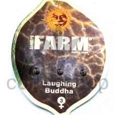 Laughing Buddha Feminised