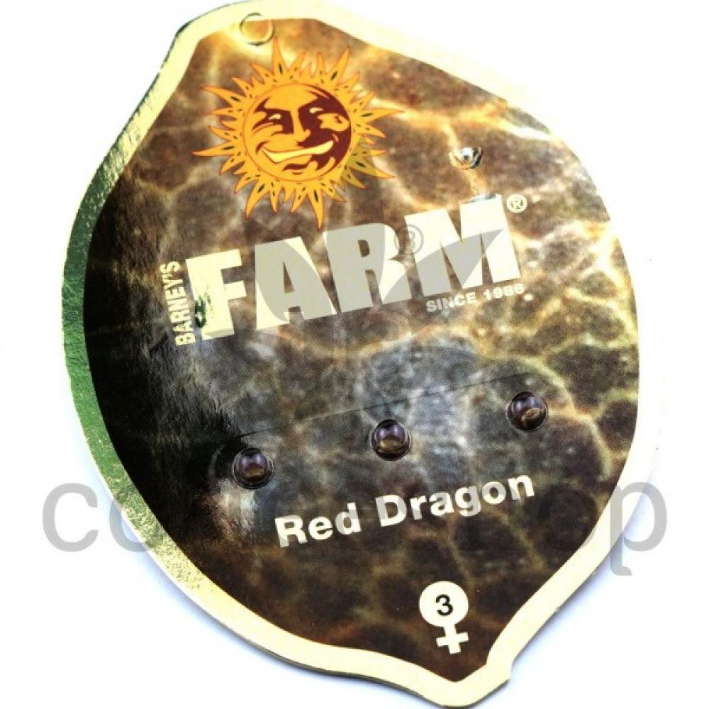 Red Dragon Feminised
