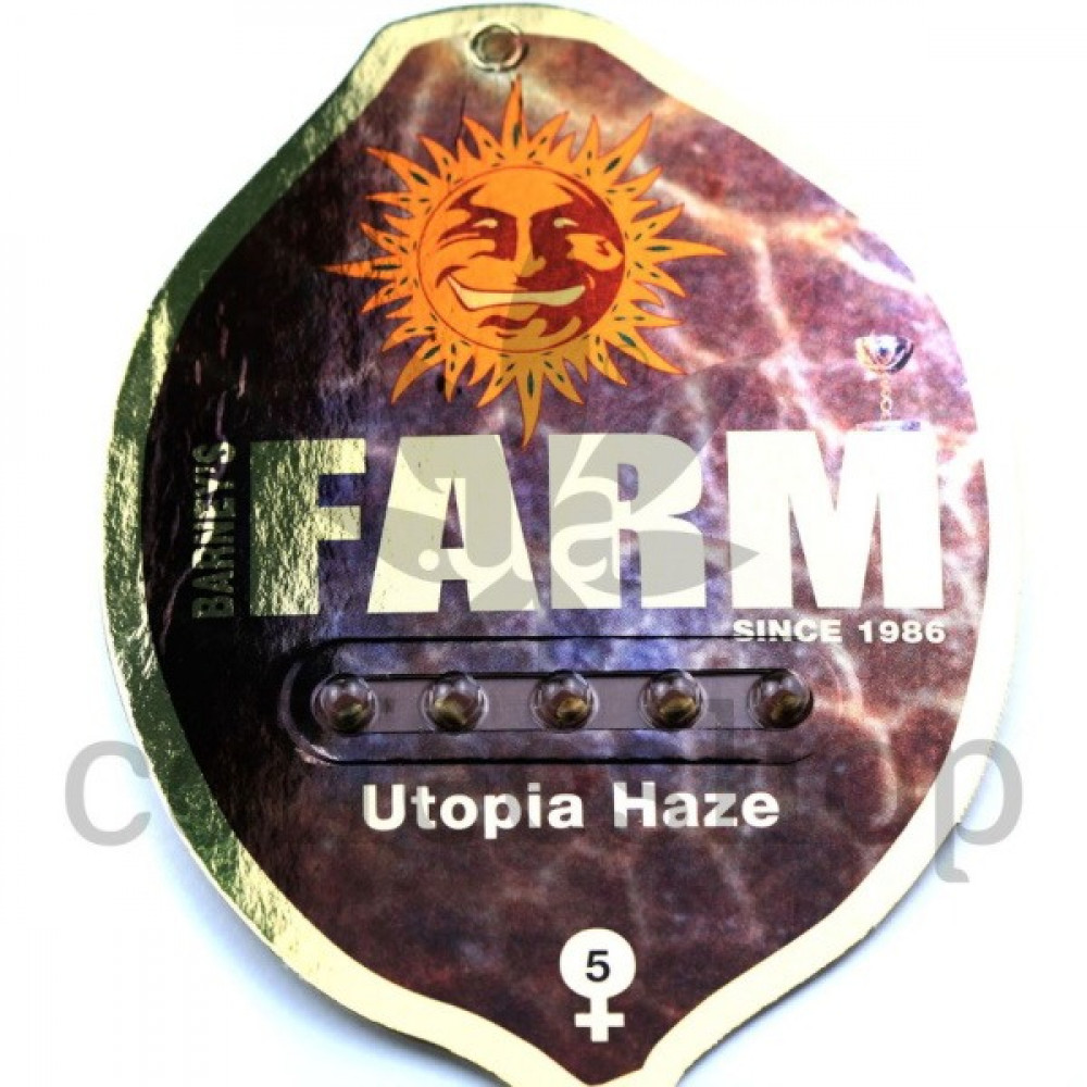 Utopia Haze Feminised