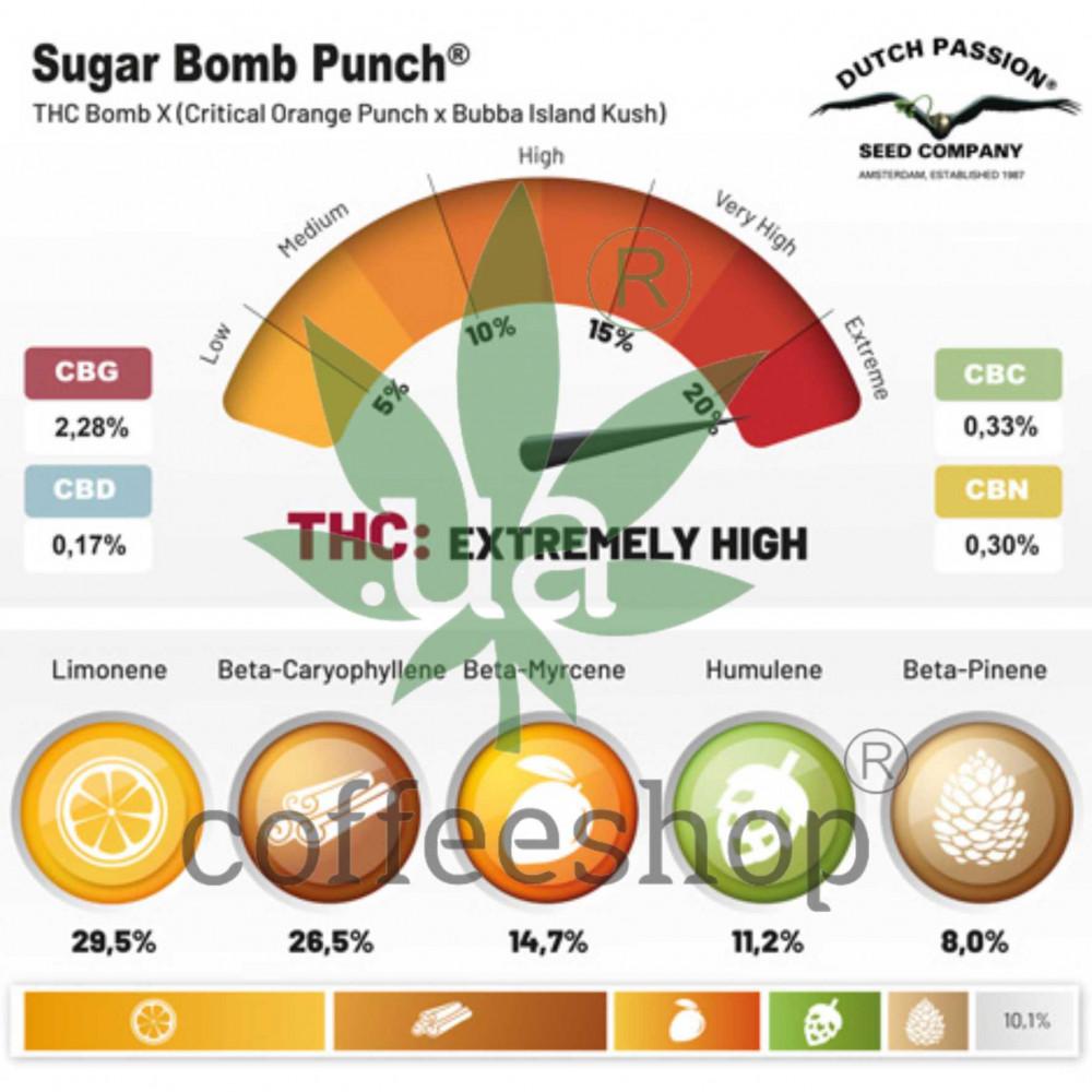 Sugar Bomb Punch feminised