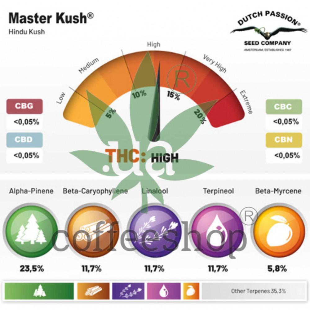 Master Kush feminised